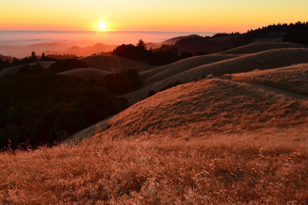 Always happy to help find the right site (Santa Cruz Mountains)